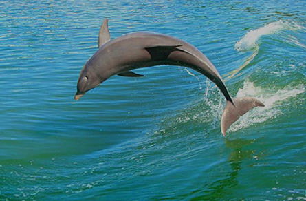 Eco, Shelling & Dolphin Tours